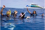 Tusa Dive: Outer Great Barrier Reef, Dive and Snorkel (snorkelling only)
