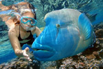 Reef Magic Cruises: Marine World Outer Barrier Reef Cruise