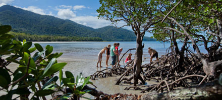 Cape Tribulation By Appointment 6