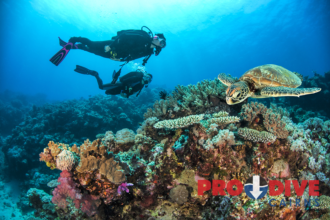 Great barrier reef tours down under tours - Best place to dive the great barrier reef ...