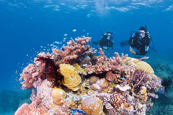 Best time to visit the great barrier reef down under - Best place to dive the great barrier reef ...