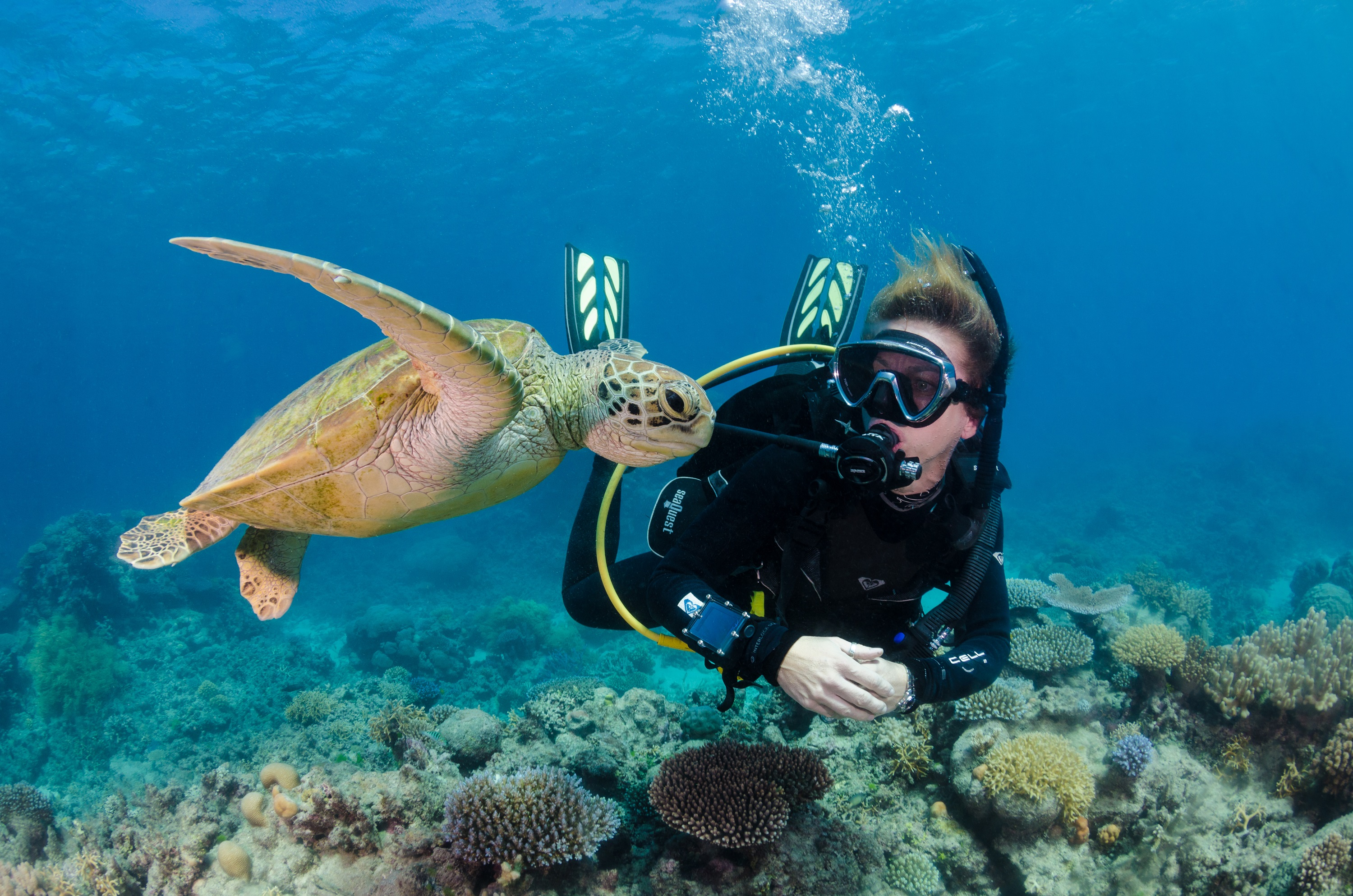 Silverswift: Dive And Snorkel Adventures